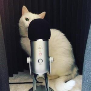 Midori helps me podcast.